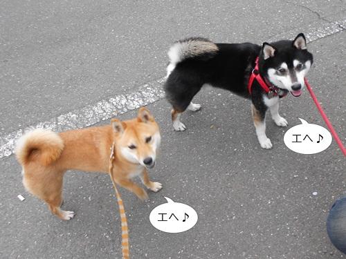 20120417小太郎9