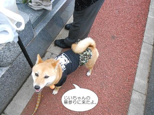 201204墓参り