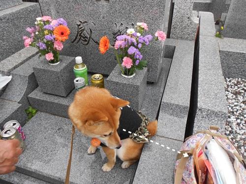 201204墓参り4