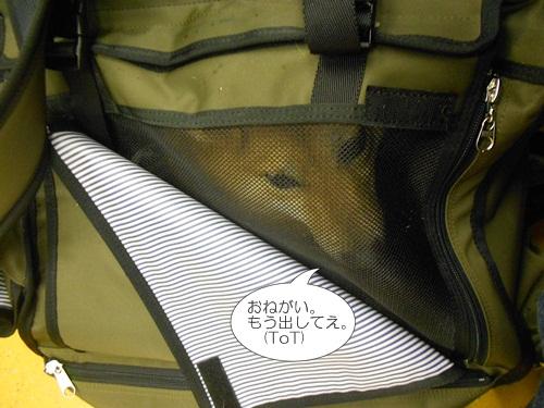 201204墓参り6