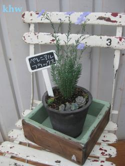 『鉢植え:拡大』