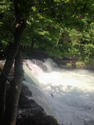 さくらの滝0713