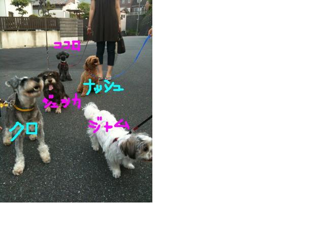 snap_kokoro1838_20108121319.jpg
