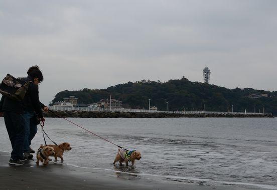 江の島13