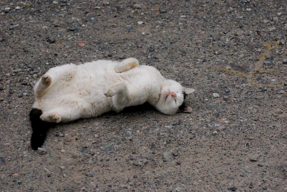 Cat-SR-006.jpg