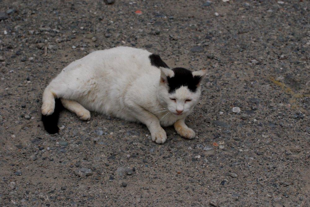 Cat-SR-013.jpg
