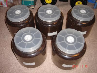 110115国産カブト飼育ビン