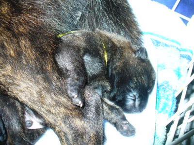 産後4日目34(1.19)