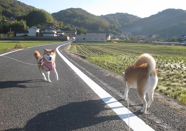 散歩、たのし!