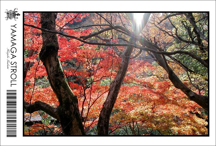 kouyou2001-s.jpg