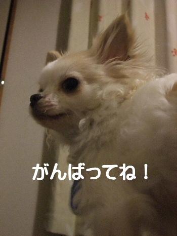 2013_02202013-2-190008.jpg