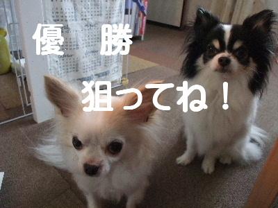 2013_02222013-2-220024.jpg