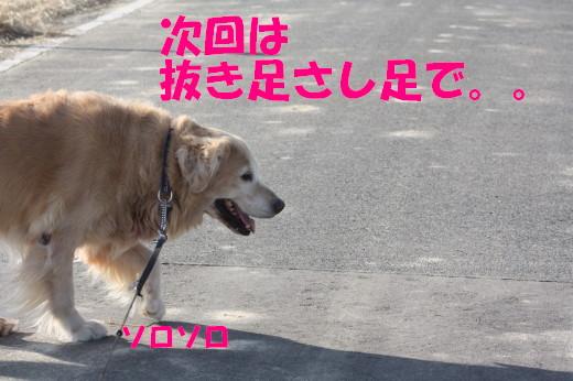 bu-82610001.jpg
