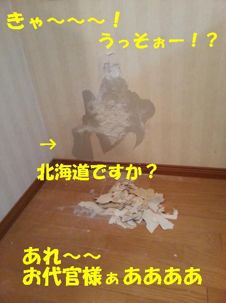 bu-99410001.jpg