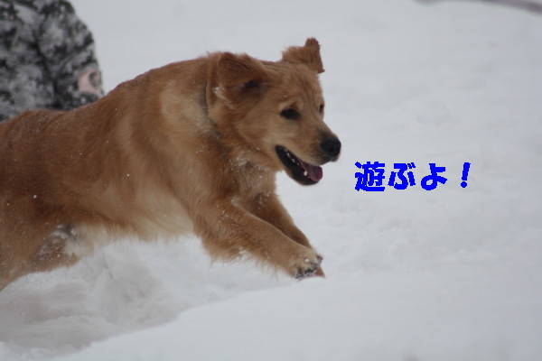 bu-99450001.jpg