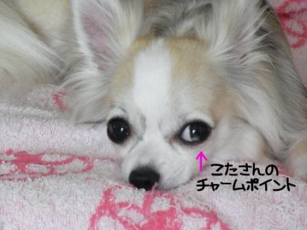 SMYEU[1]