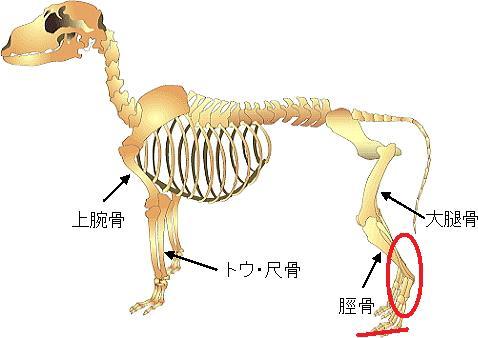 sisikaibou-1.jpg