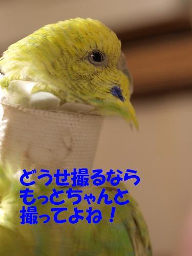 P1246981.jpg