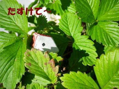 itigo1_20101124162301.jpg