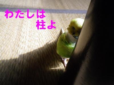 koushuu3.jpg