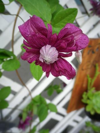 kurema2_20110528170608.jpg