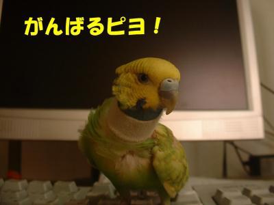 tobu3.jpg