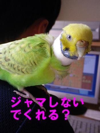 touhi6.jpg