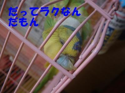 yobi1.jpg