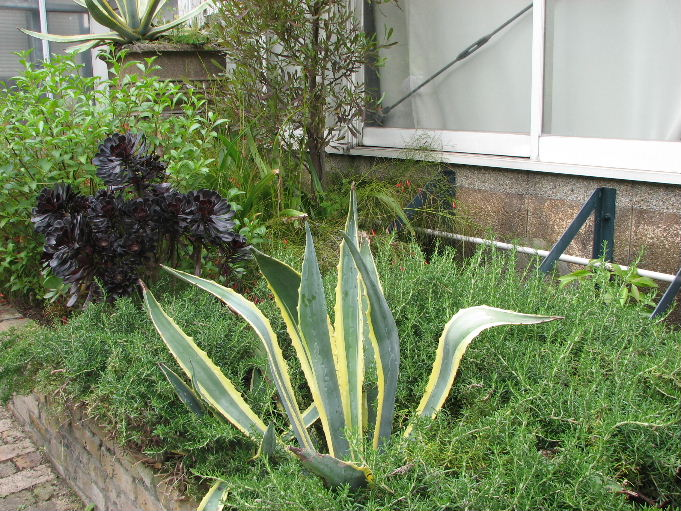 ガーデンフィールズ2009