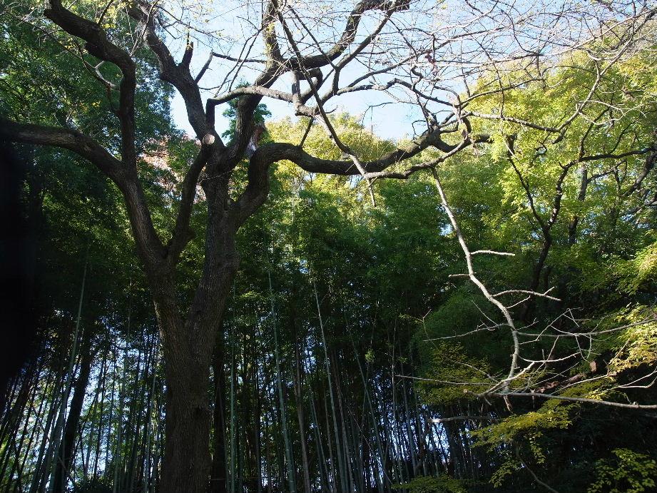 自然公園2013_11#7