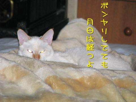 092_Rのコピー