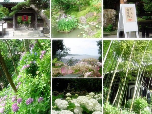 紫陽花の長谷寺
