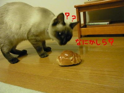 RIMG0231_20111120232315.jpg