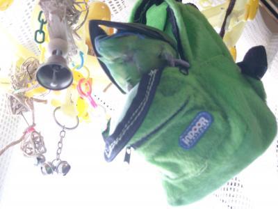 DSCN8176_convert_20100916110524.jpg