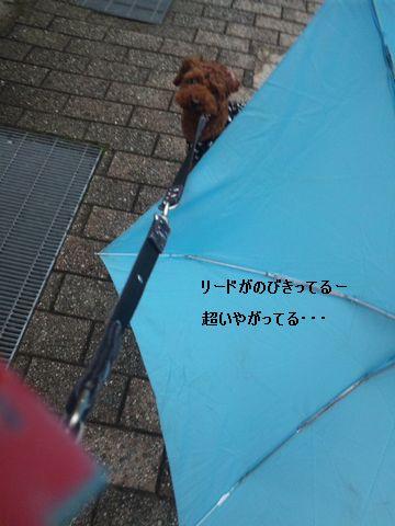 031_20101011075336.jpg