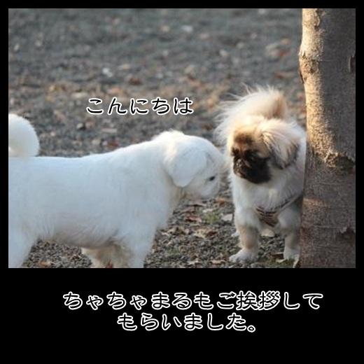 92_20131227185608ff2.jpg