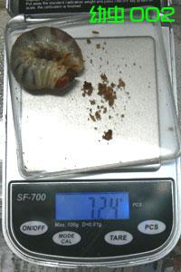 幼虫002