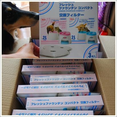 cats19_20130624094605.jpg