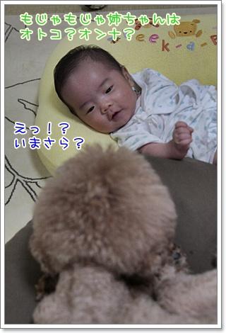 2_20110916125314.jpg