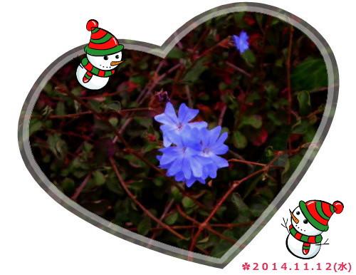 花ブ20141113-2