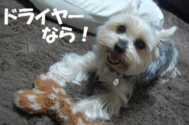 dog54.jpg