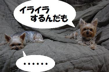 dog55.jpg