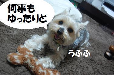 dog63.jpg