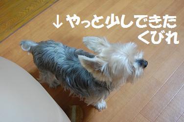dog64.jpg