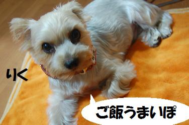 dog65.jpg