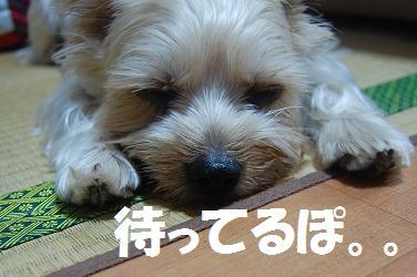 dog71.jpg