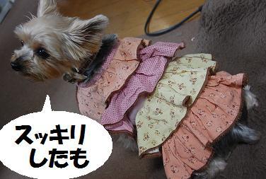 dog78.jpg