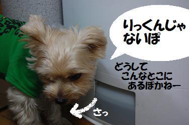 dog96.jpg