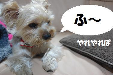 dog97.jpg