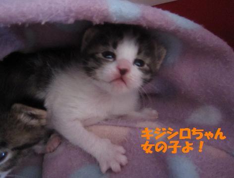 キジシロちゃん2011-4-29